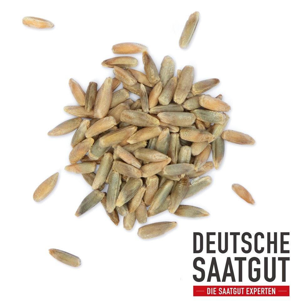 Bernburger Futterroggen MFG Deutsche Saatgut GmbH